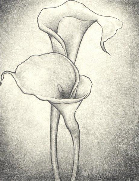 Dibujos de alcatraces a lapiz - Imagui