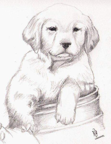 Dibujos faciles para dibujar a lapiz de animales  Imagui