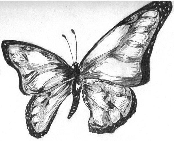 Mariposas dibujo a lapiz - Imagui
