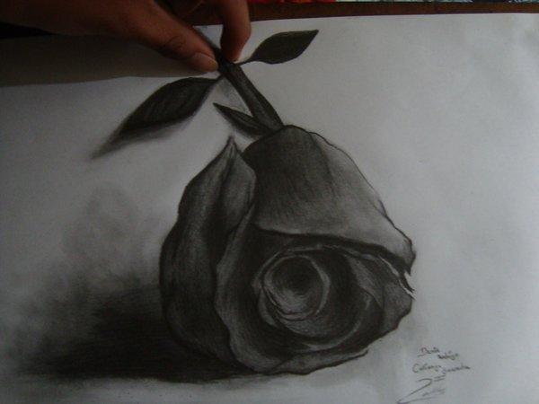 Dibujo De Flores A Lapiz 3d Imagui