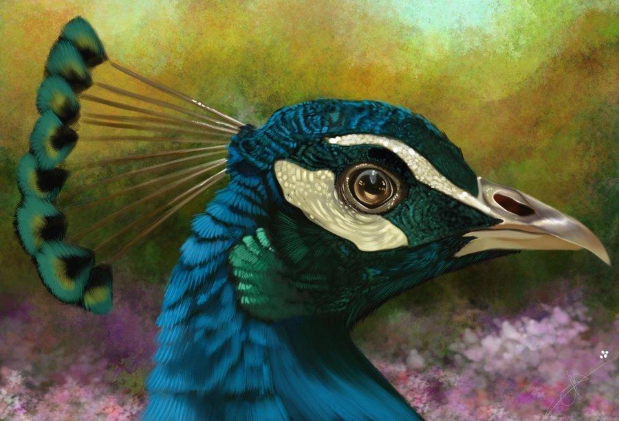 Pavo real por yuny dibujando - Fotos de un pavo real ...