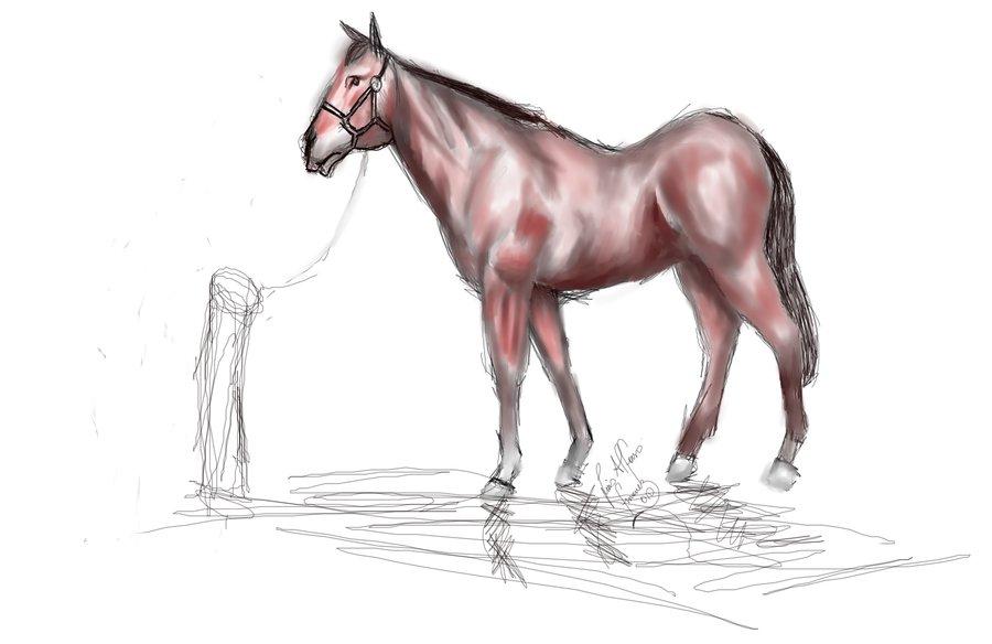 caballo_11149.jpg