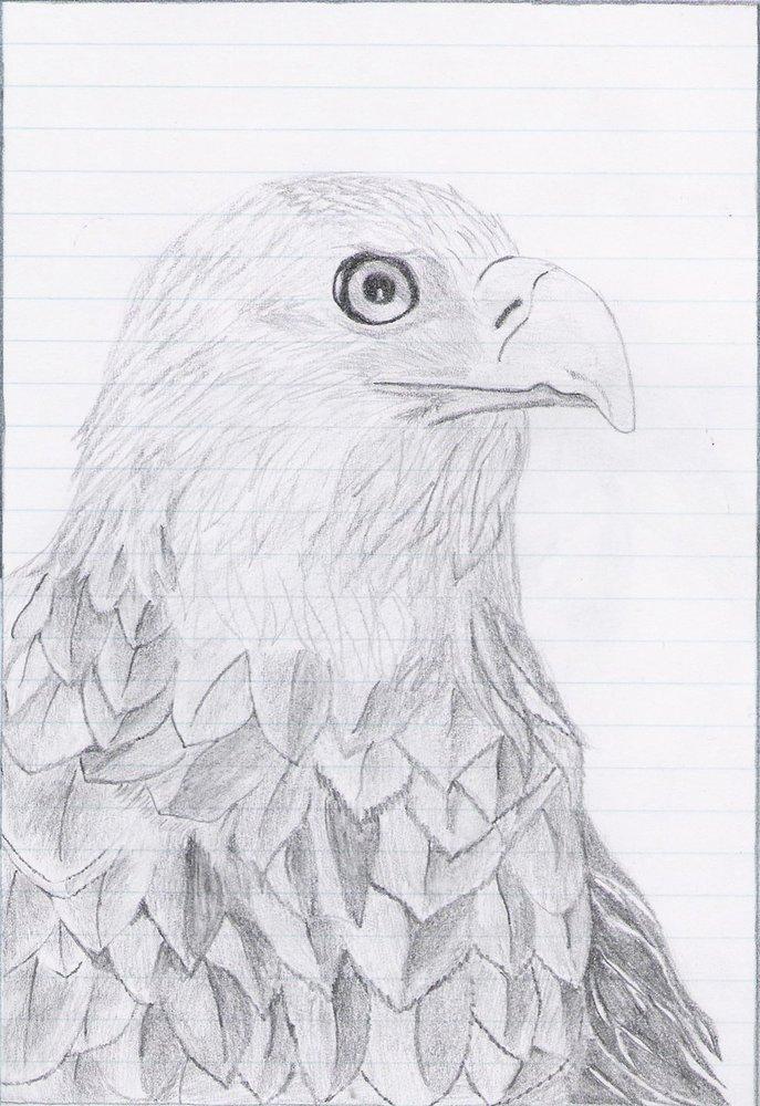 Aguila_17765.jpg