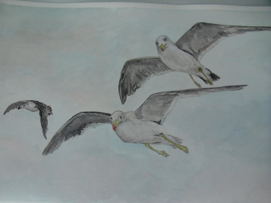gaviotas_volando_17911.jpg