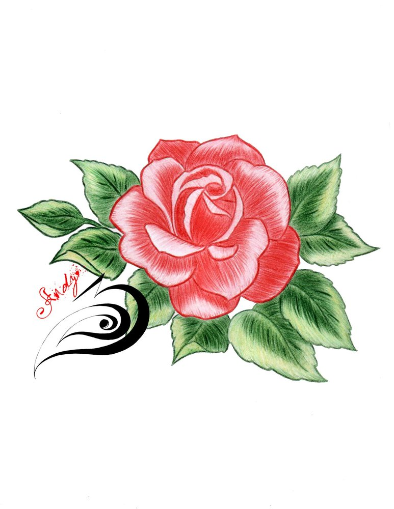Rosa Por Exay Dibujando