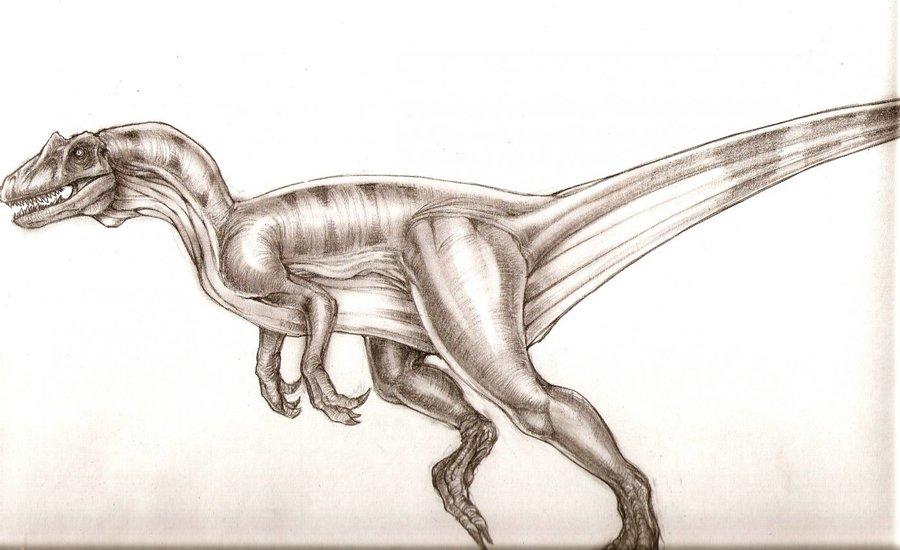 allosaurus_22161.jpg