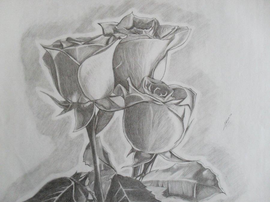 Rosas Por Pituin Dibujando