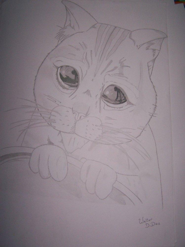 gato_con_botas_24780.JPG