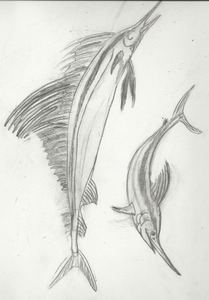 mi_bloc_de_primaria_2003_peces_espada_32351.jpg