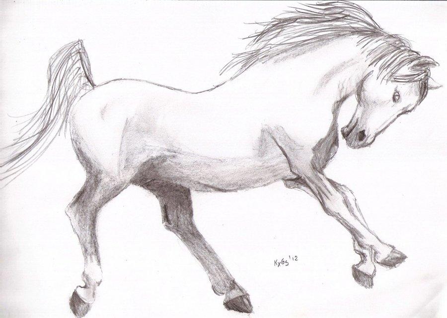 caballo_32550.jpg