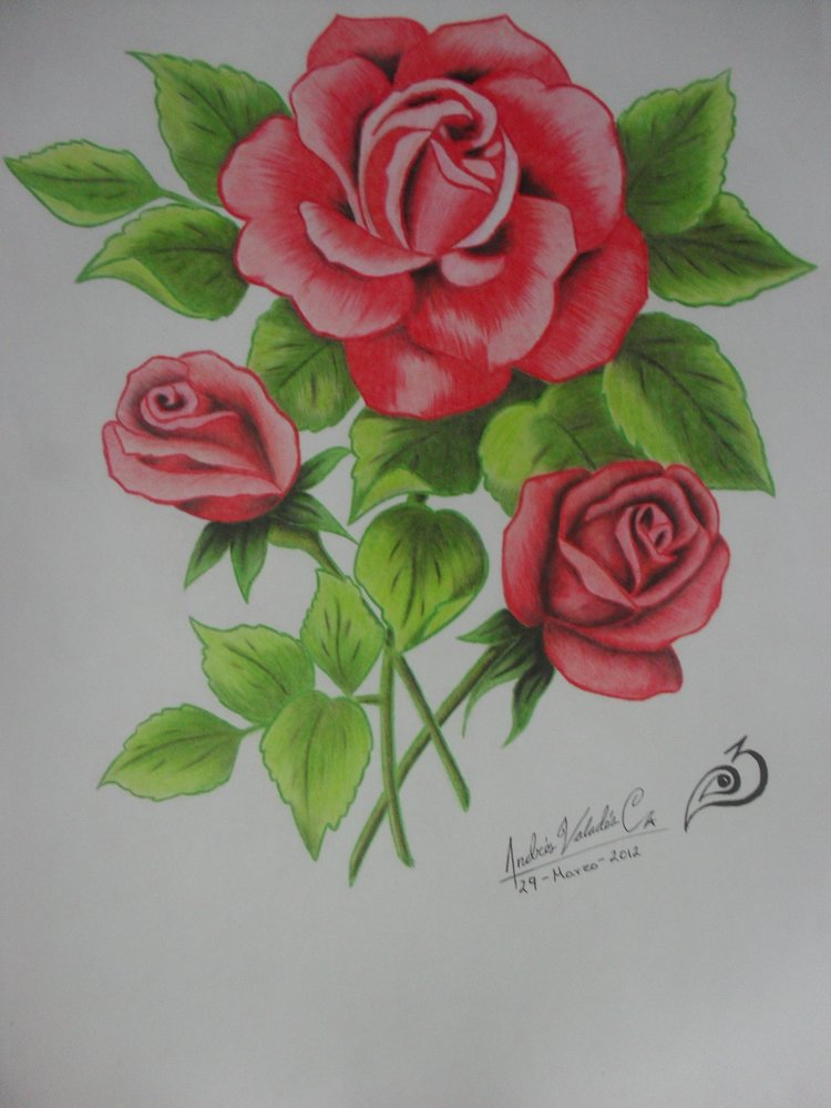 Rosas Por Exay Dibujando
