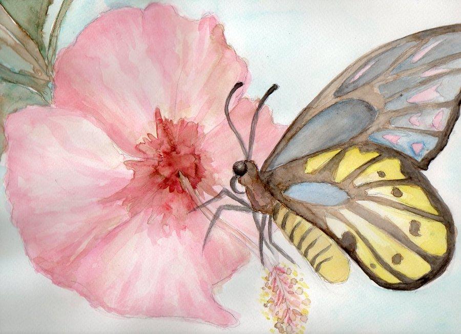 mariposa_33213.jpg