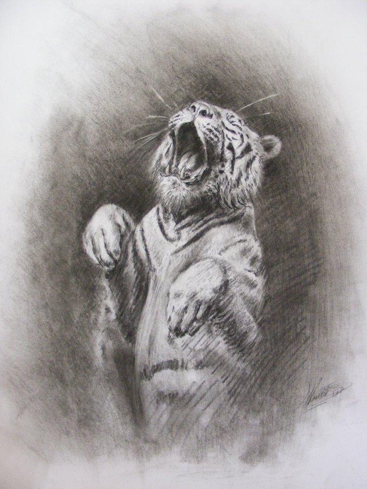 tigre_saltando_34237.JPG