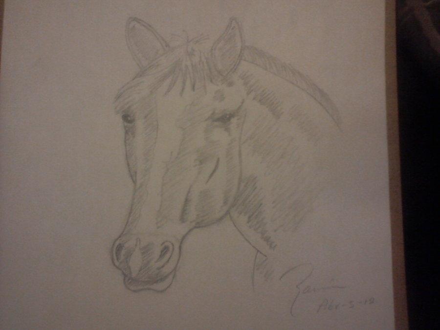 caballo_34663.jpg