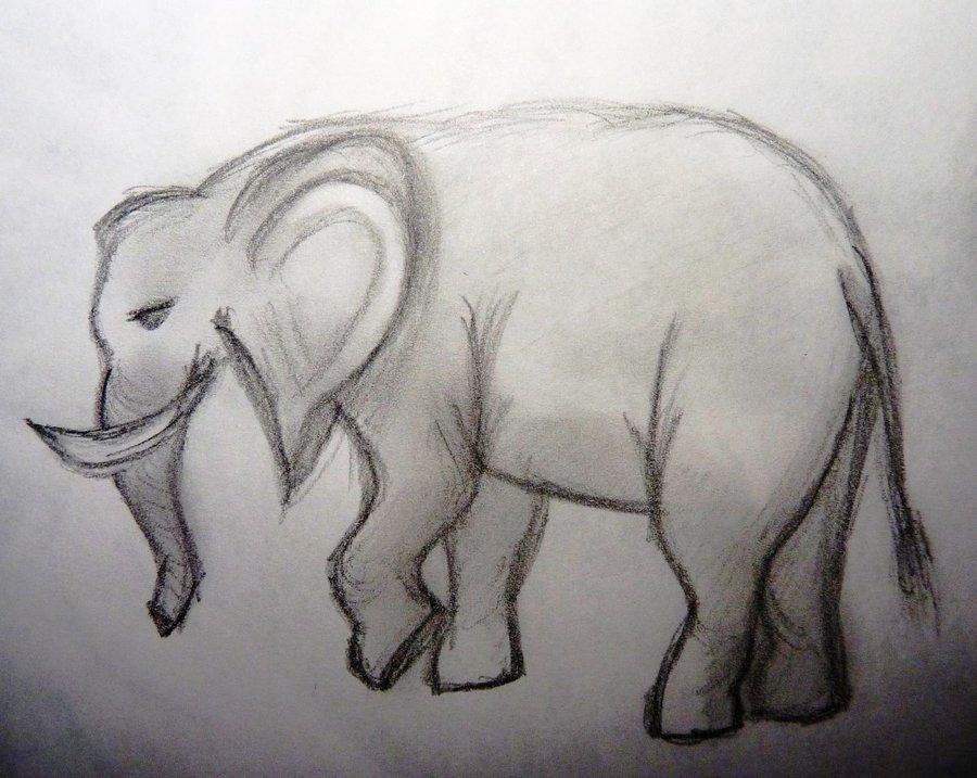 elefante_36301.JPG