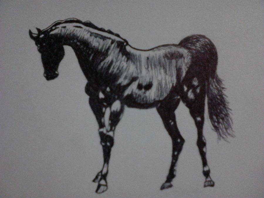 caballo_hecho_a_tinta_38189.jpg