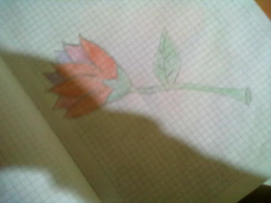 flor_29153.jpg