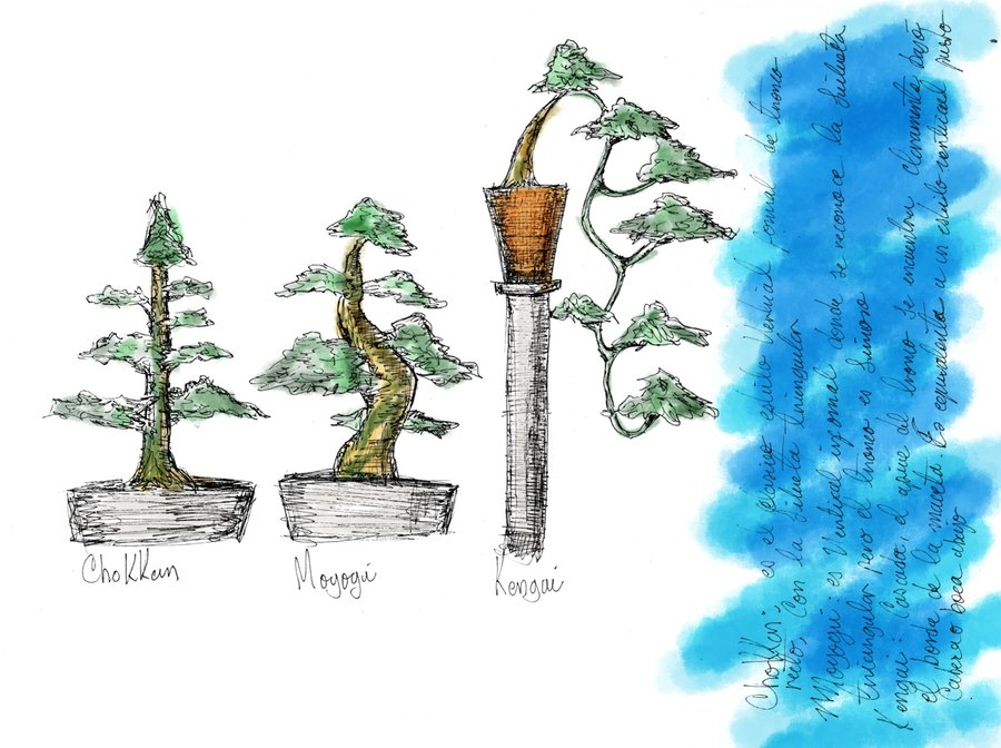 sketches_3_bonsai_55167.jpg