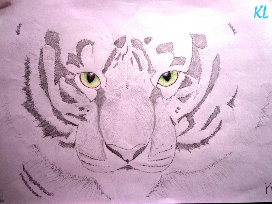 tigre_albino_57773.jpg