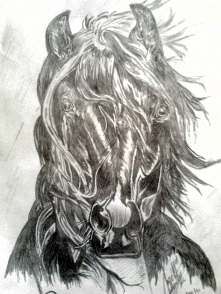 cabeza_de_caballo_frison_59700.jpg