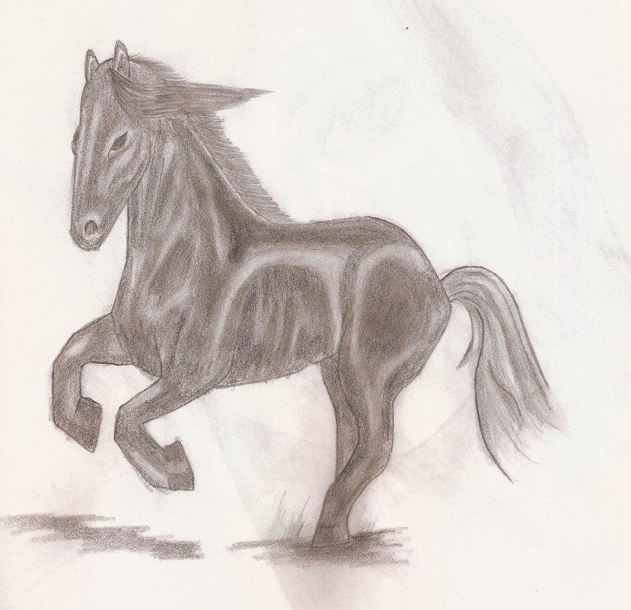 caballo_negro_66055.jpg