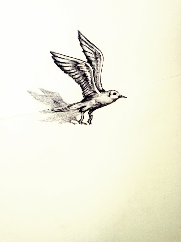 bird_3d_66212.jpg
