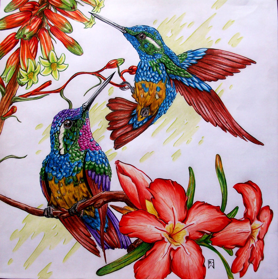 colibries_68702.jpg