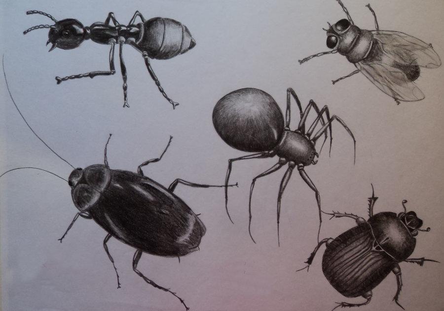 insectos_69778.jpg