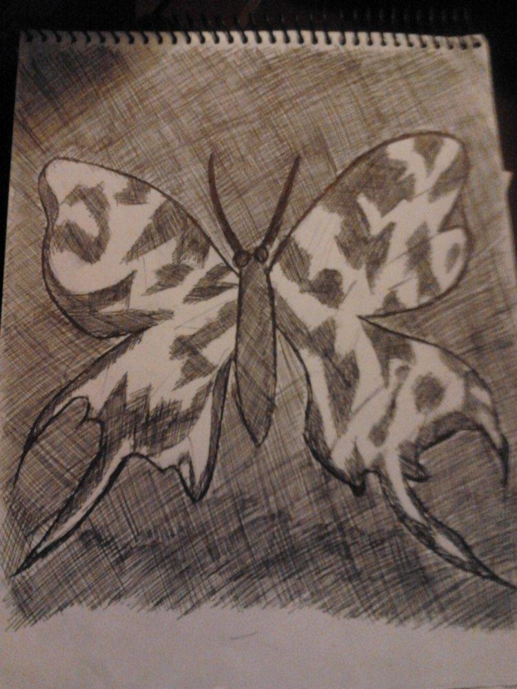 mariposa_3_70488.jpg