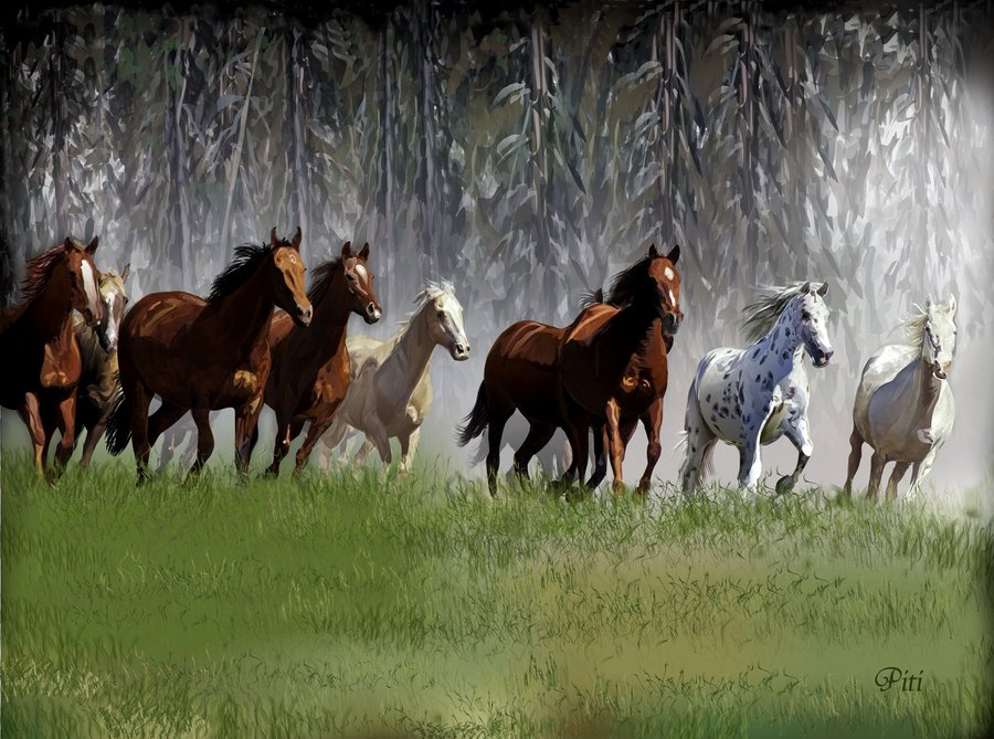 caballos_49967.jpg