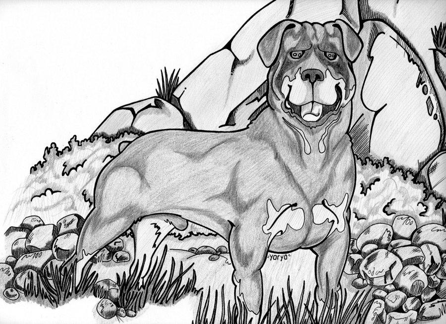 Best Perros Rottweiler Para Dibujar A Lapiz Image Collection