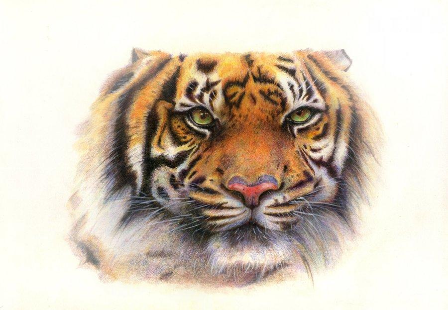 Tigre de Bengala. por AlbertoGongora | Dibujando