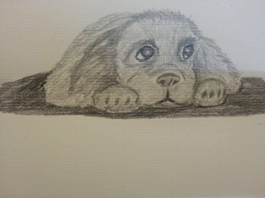 cachorrillo_51924.jpg