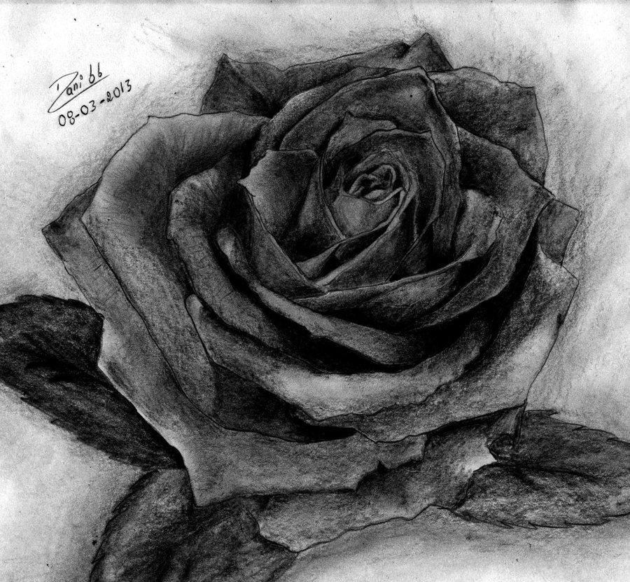 Rosa A Lapiz Por Danny Dibujando