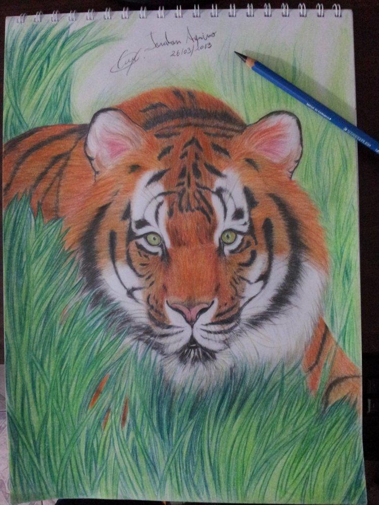 tigre_esperando_el_momento_adecuado_53166.jpg
