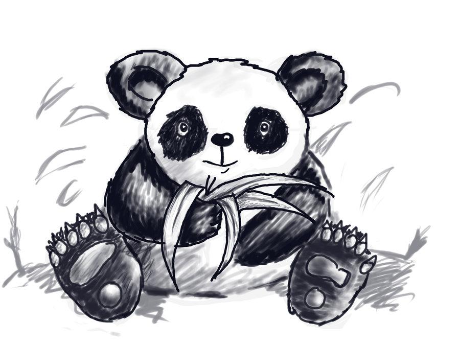 panda_48014.jpg