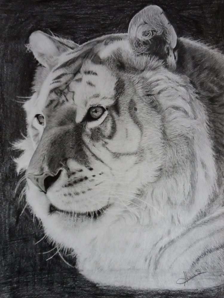 golden_tiger_portrait_71717.jpg