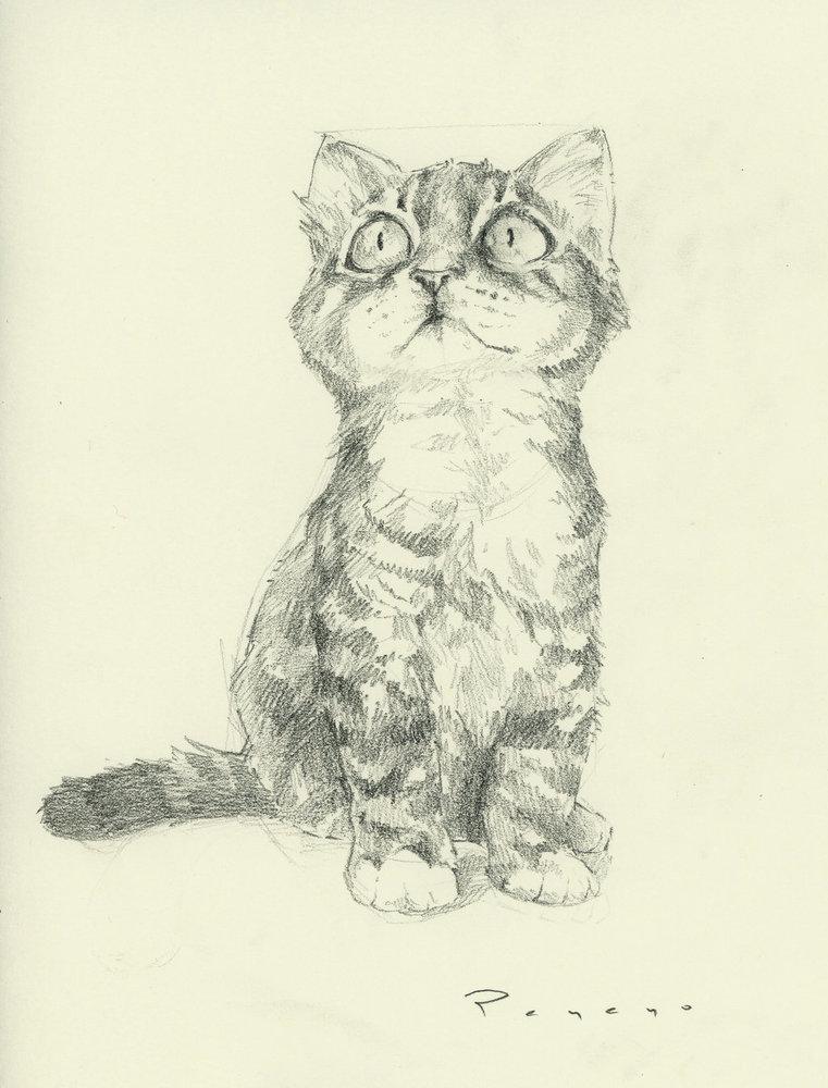 meow_77431.jpg