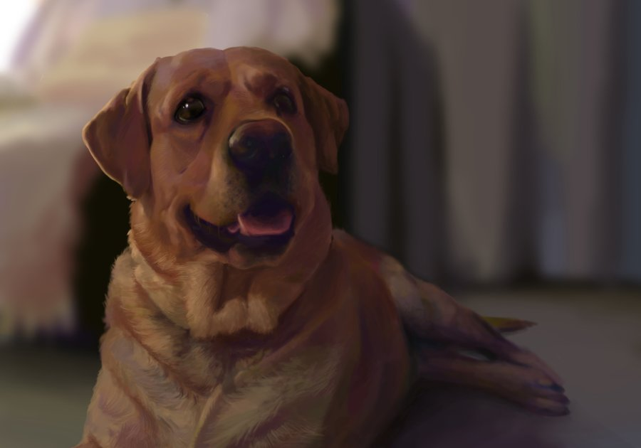 illustration_bronx_the_dog_ilustracion_bronx_el_perro_78175.jpg