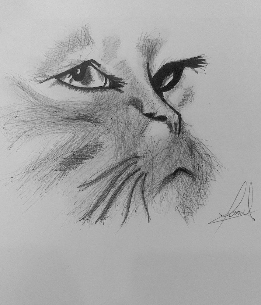 retrato_de_un_felino_81180.jpg