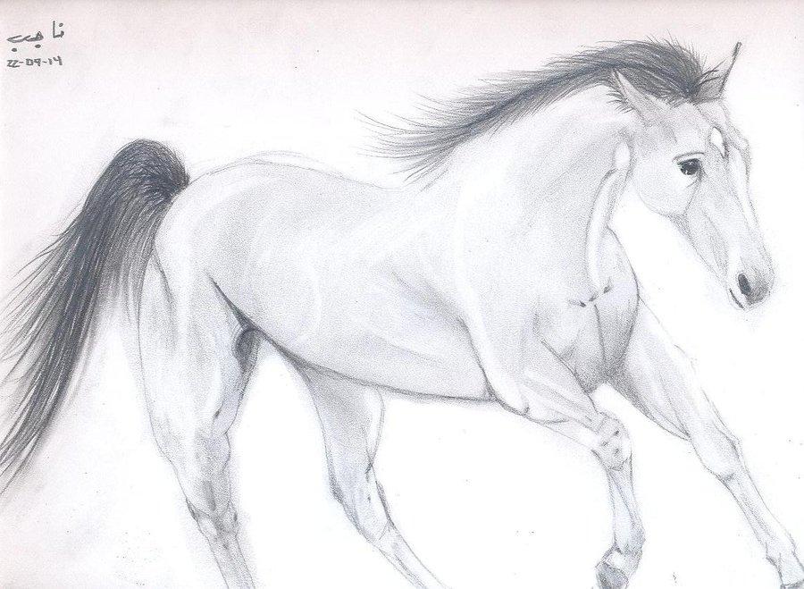caballo_pensamiento_85601.jpg
