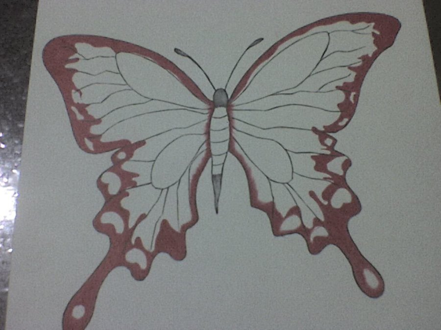 mariposa_73882.JPG