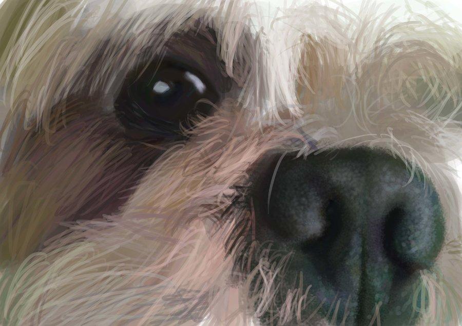 dog_eye_74412.jpg