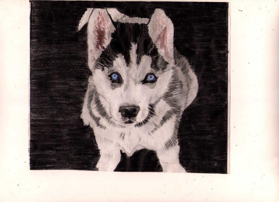 cachorro_lobo_74534.jpg