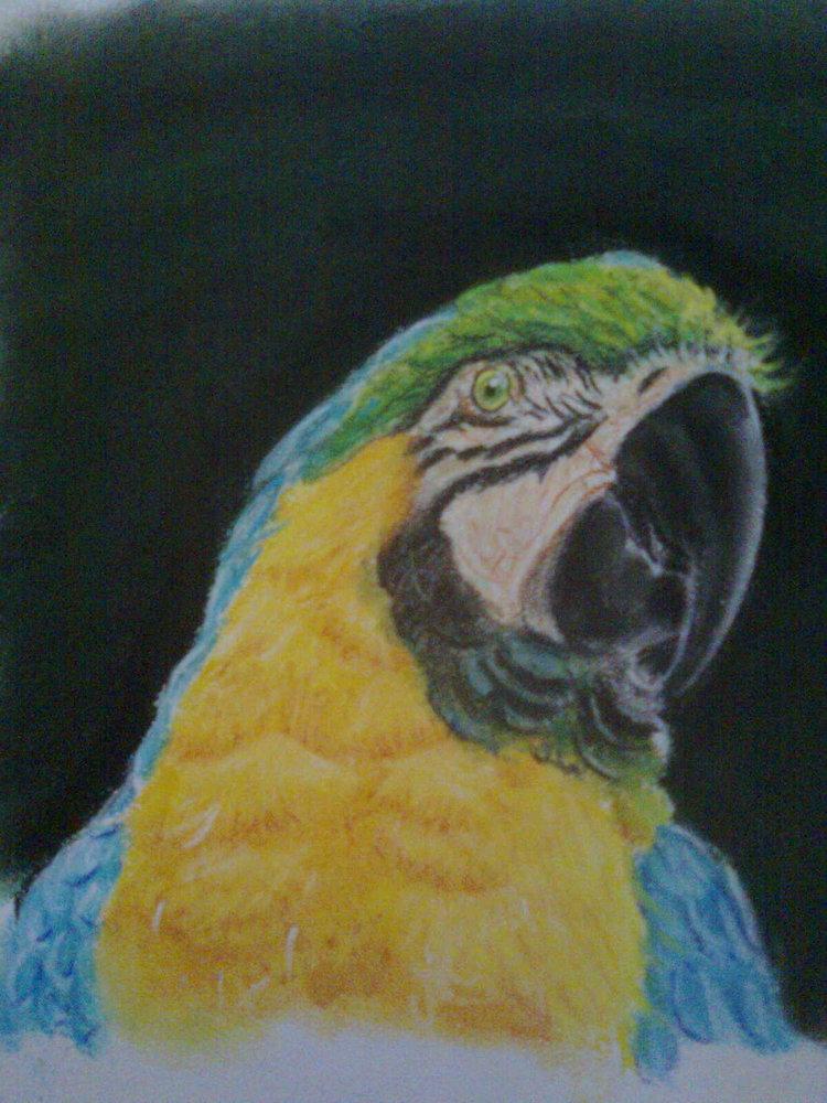 guacamayo_pastel_75465.jpg