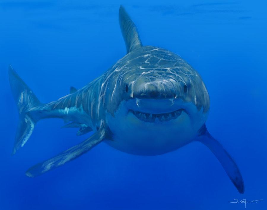 white_shark_72114.jpg
