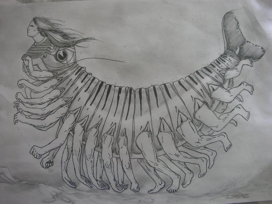 un_poliqueto_tigre_hembra_siendo_asustado_por_el_observador_77215.JPG