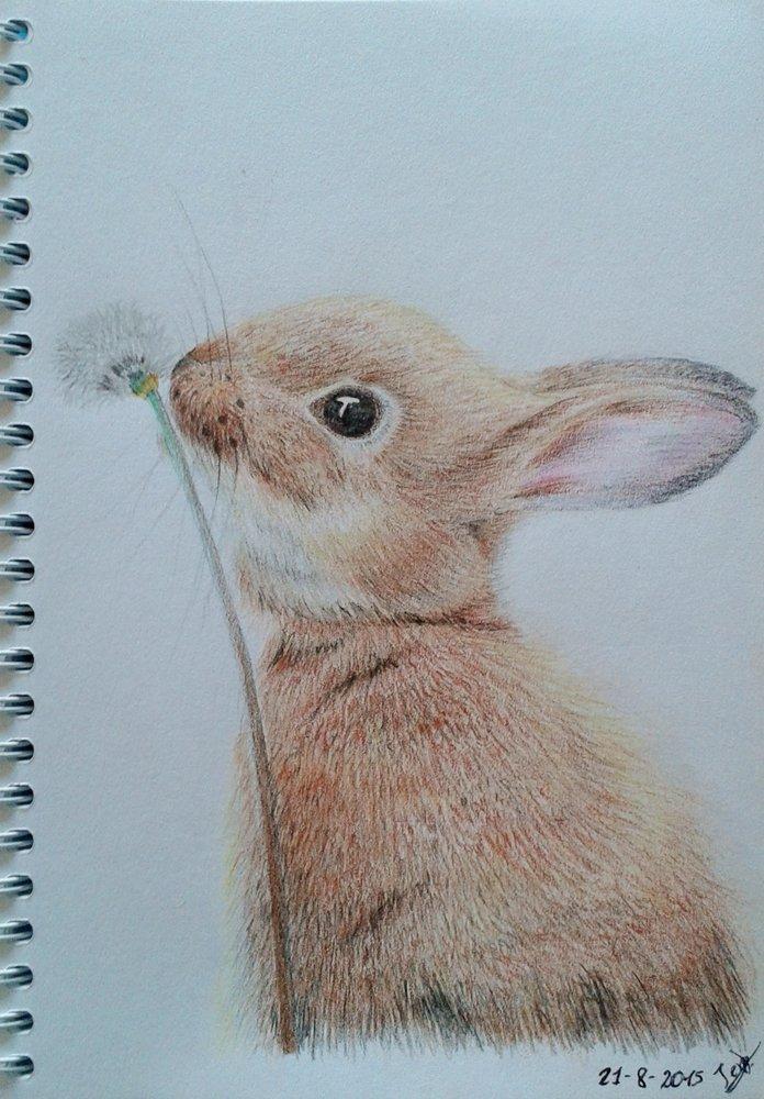 Conejo por JeroSiquier | Dibujando