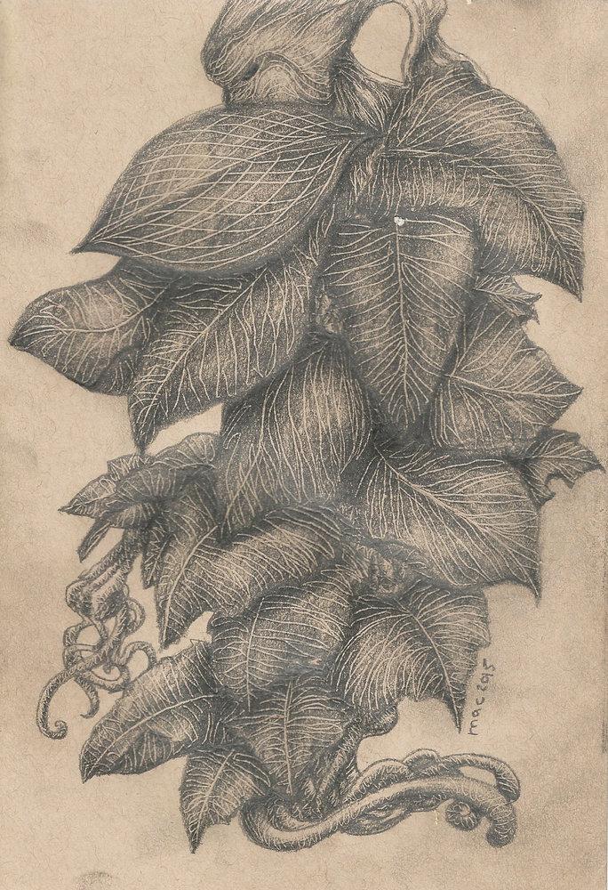 planta_234145.jpg