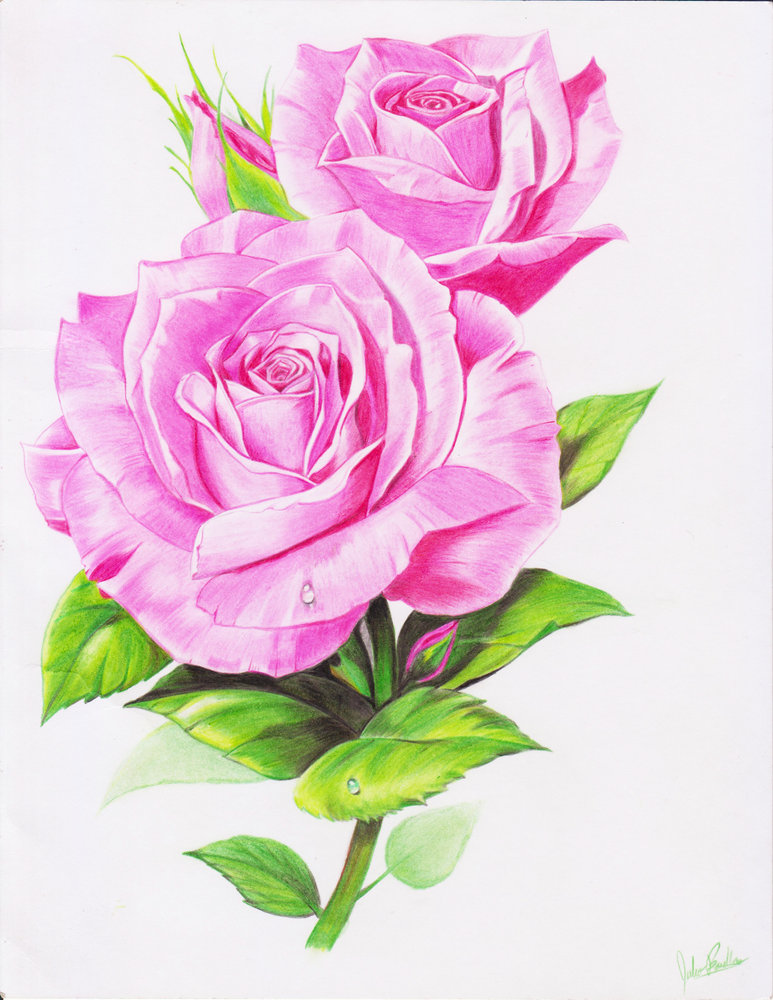 rosa_dibujo_239433.jpg